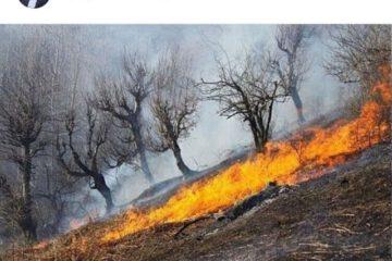 واعظی: گزارش جامع آتشسوزی «خائیز» برای رئیسجمهوری ارسال میشود