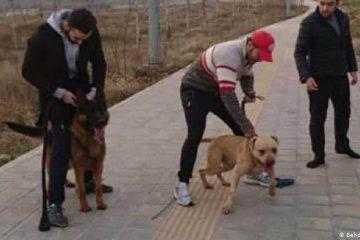 قانون در مورد سگ گردانی چه میگوید؟