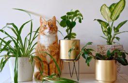 در میان گیاهان آپارتمانی که زینت بخش فضای داخلی منزل هستند، برخی از گونههای سمی وجود دارند که نگهداری و پرورش آنها در خانه ممکن است برای کودکان، افراد دچار زوال عقل و یا حیوانات خانگی خطرناک باشد.